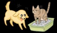 猫大便有那么好吃吗?狗狗爱吃猫大便原因大解析!