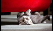 5个小技巧如何让你的猫更爱你