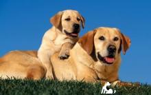 让爱犬变漂亮 狗狗美容诀窍重点