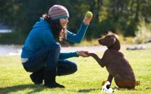 改掉狗狗坏习惯 正确训练爱犬