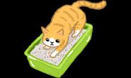 猫咪用手喝水好可爱?细菌都被吃到肚子里啦!