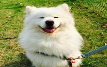 怎么养好处于换毛期的狗狗