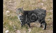 10种寿命最长的猫 波斯猫活得久吗