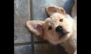 关于小狗狗为什么要补钙