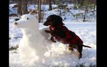 腊肠在自家院子里无情摧毁腊肠雪人