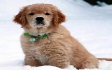 冬季养狗狗有哪些注意事项