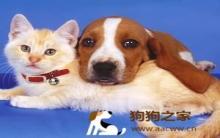 养猫又养狗要注意哪些事项?