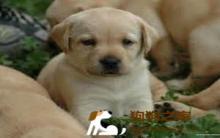幼犬期调教:培养听话狗狗 家教很重要