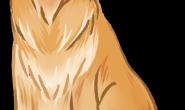 黄金猎犬就是长毛的拉不拉多?大错特错!不同之处还有好多