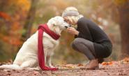 狗狗便秘的五大常见原因及解决方法!让狗狗肠胃通畅!