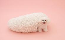 比人还幸福!伊东豊雄为狗狗打造超时尚「狗屋」
