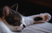 """猫界""""流感""""降临,请小心猫咪鼻气管炎!"""