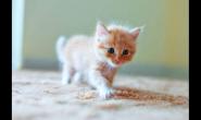 平常要怎么给小猫咪喂食