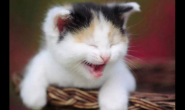 喂小土猫什么猫粮好 好猫粮好不好