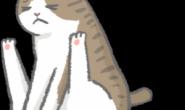 猫猫一直磨屁股 肛门腺发炎4大征兆!