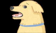 (高龄狗猫)狗狗年纪大最常出现五大问题!