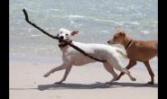 每个狗狗成长中的必经之路,铲屎官千万不可跳过!
