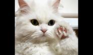 给猫咪喂食要注意肠胃健康