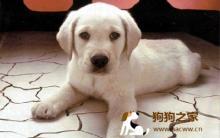 狗疾病症状及异常表现全解析