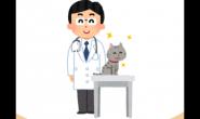 猫皮肤病怎么办?猫奴们需要注意的几件事!