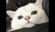 给猫咪吃猫粮要注意的事情