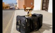 这样做,宠物也能跟你一起搭飞机出国!