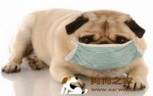 犬结核病症状防治详解析