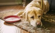 狗狗肝癌的症状、原因和治疗