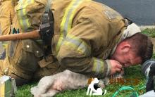 汪汪CPR 消防员不愿放弃!每个生命都有权力活下去!