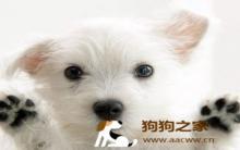 训练狗狗胆量 13种勇敢教战守则