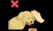狗狗可能不喜欢被摸的三个场合