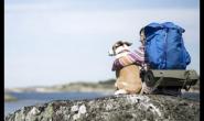 如何与您的狗狗进行最佳露营之旅