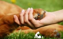 宠物狗剪指甲 美容及护理攻略
