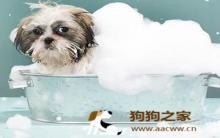 狗狗美容:酷热夏天狗狗爱干净
