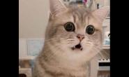 猫咪会因为天热不吃饭吗
