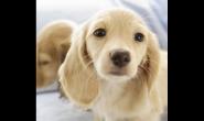换牙的狗狗要注意补钙吗