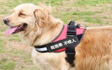 教你如何遛狗的一些小技巧?