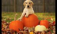 10种适合狗的人类健康食品 和狗狗共享