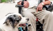 如何将狗狗注册为治疗犬
