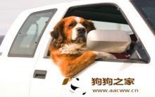 狗狗晕车症状 怎么预防狗狗晕车
