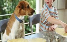 全国桃月:用6份美味桃子食谱来款待狗