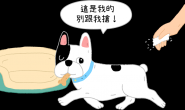 """""""外带""""更美味?为什么狗狗不爱在碗里吃饭?"""