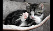 掉毛就掉毛,竟然还会引起猫咪专属的毛球症?
