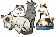 猫瘟:猫咪界头号高致死率的传染性疾病