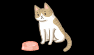 猫咪体重异常下降?留心这4种可能原因!