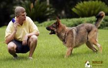训练狗狗有诀窍 犬类服从要注意