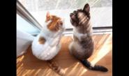 肠胃不舒服的猫咪要注意喂食