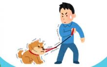 狗狗突然变身无敌浩克,力大无穷难控制时该怎么办?