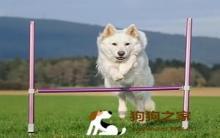 带狗运动及四大训练教学!