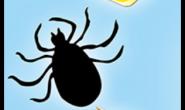 壁虱是仅次于蚊子的最大疾病传播病媒